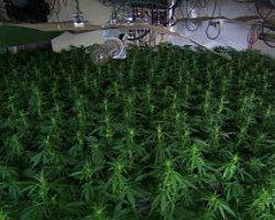 'Sık Marihuana Kullanımı Beyni Olumsuz Etkiliyor'