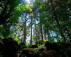 Ormana Betondan Hançer