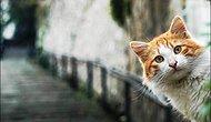 Dünyanın En Güzel Kedileri Bu Şehirde Yaşıyor Dedirtecek 20 İstanbul Kedisi