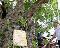 Bu Ağaca Dokunan Hapse Girecek
