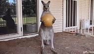 Hayvanların da Şapşal ve Arıza Olabileceklerini Kanıtlayan 25 GIF