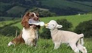 Arkadaşlarına Yardım Etmekten Çekinmeyen 15 Yardımsever Hayvan