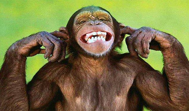 19. Evcil maymun tarafından ısırılma sonucunda ölmek