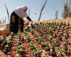 Bombalarda Çiçek Yetiştiren Filistinli Kadınlar