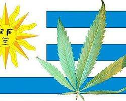 Uruguay hükümeti marihuana satışına izin veren kararnamenin detaylarını belirledi.