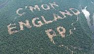 Reklam İçin Ağaç Katliamı