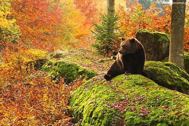 Dünyanın En Büyüleyici Yerlerinden Birisi Olan Bavyera Ormanı'ndan Nefes Kesen 12 Doğa Manzarası