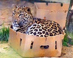 Boyutları Ne Olursa Olsun Tüm Kedilerin Aynı Olduğunu Gösteren 20 Kanıt