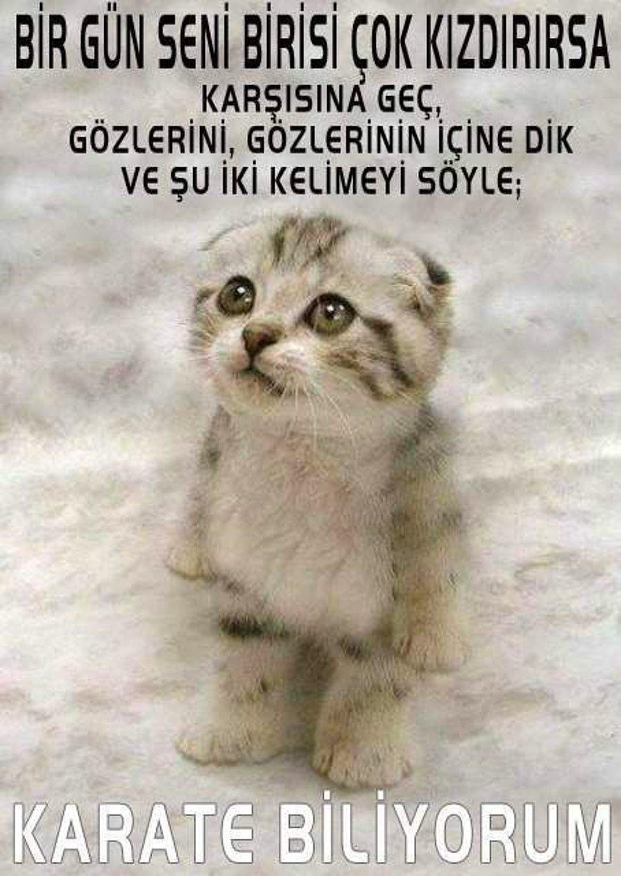 En Komik 16 Kedi Fotoğrafı Onedio Com
