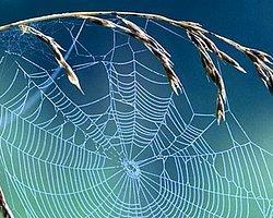 Örümcek Ağı, Çelik Zırhtan Kuvvetli