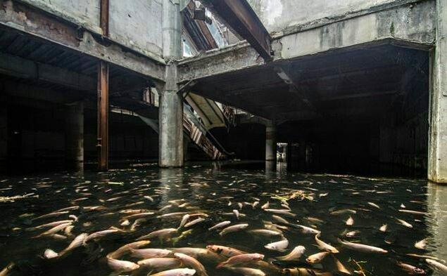 Binlerce balık yaşıyor