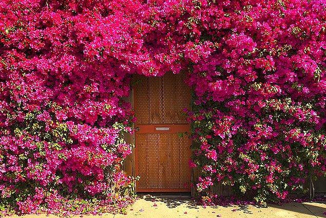 15. Neresi olduğu bilinmeyen bir bahçe kapısı