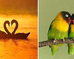 1. Tek eşli ilişkiler hayvanlar diyarında da var.