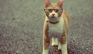 Herkesin Hayatında Bir Kediye Sahip Olması Gerektiğinin 25 Sihirli Kanıtı