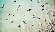 Kuşlardan İlham Alan 22 Şiir Dizesi