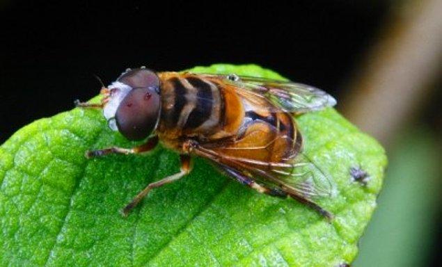 1. Yazın artan sinek ve arıları bulunduğunuz ortamdan kovmak için, fincanın içine kuru kahve koyup, yakın. Bu onları uzun süre uzak tutacaktır.
