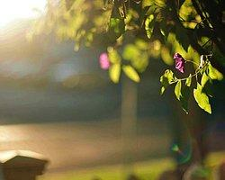 Meteoroloji Uyardı: Güneş Altında Kalmayın