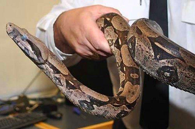 15. Bir yılan 3 yıl uyuyabilir.