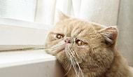 """""""Kalıbımı Basarım Bu Kedi Depresyonda"""" Dedirten 15 Kedi"""