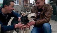 Köpek Yüzünden Tartıştığı Oğlunu Öldürdü