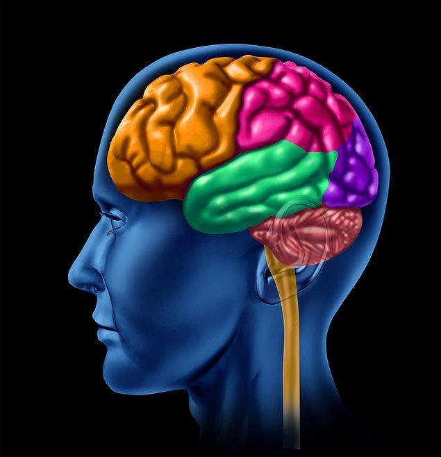 Birinin yüzünü hatırlamak için beynin sağ tarafı kullanılır.