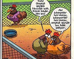 Tavuk Üretiminde Hormon Kullanıyor mu?