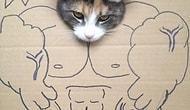 Çizimlere Salça Olan 8 Kedi
