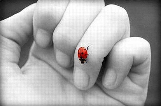 Uğur böceğini elinde gezdirmek  ve sonrasında uçup gidişini izlemek..