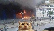 18 Kedi Fotoğrafıyla İnsan Davranışlarının Benzetilmesi
