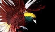 Kağıttan Yapılmış İnanılmaz Derecede Gerçekçi 43 Kuş