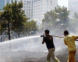Atatürk Orman Çiftliği'ndeki Yangının Nedeni Sabotaj mı?