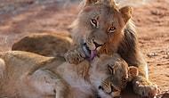 Bunlar Nasıl Bu Kadar Sevimli Olabilir Dedirten 14 Hayvan