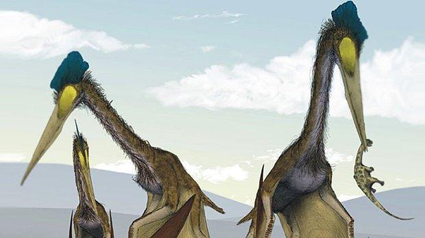 Dişsiz Dev Dinozor Göklerin Hakimiydi