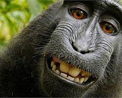 Meşhur Maymun Selfie'sinde Kazanan Taraf Belli Oldu