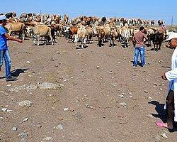 Kars'ta Susuzluğa 'Bornozlu' Tepki: 'Bu Şekilde Nasıl 3 Çocuk Yapacağız?'