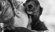 """İçinizi Isıtacak 26 En Yakın Dost, """"Köpek"""" Sarılması"""