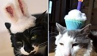 Şapka Takınca Şirinlik Katsayısı Logaritmik Olarak Artmış 23 Kedi