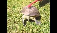 Kaplumbağa nasıl temizlenir?