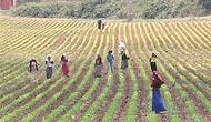 Hayalet Tarım İşçileri