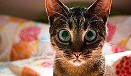 Kediler Hakkında Ünlüler Tarafından Söylenmiş 15 Söz