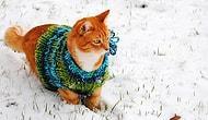 Kış Mevsimine Şimdiden Hazır Olan Moda Takipçisi 60 Tatlış Kedi