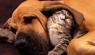Kedi ile Köpek Anlaşamaz Diyenlere İnat Enseye Şaplak 35 Kedi-Köpek Hali