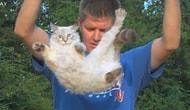 Ağır Çekim Kedinin Dört Ayağı Üzerine Düşmesi