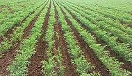 Organik Tarımda Akla Gelen 10 Meyve ve Üretim Yerleri