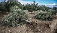 Anasayfa Gündem Soma'da ağaç katliamı başladı! Soma'da ağaç katliamı
