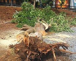 Kestiği Ağacın Altında Kalıp Hayatını Kaybetti