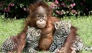 Hayvanlar Hakkında Bilinmeyen Birbirinden İlginç 70 Bilgi