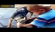 Çocuk Kendini Isıran Köpeği Isırdı!