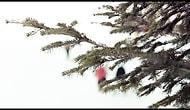 Bansko'nun Popüler Bir Kayak Merkezi Olmasının 10 Nedeni