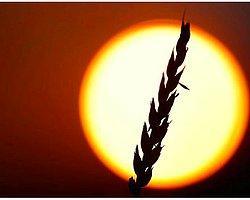 Genetik Kodlamayla Tarım Ürünleri Artırılabilir mi?